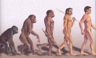 Bipedalism- Was it a good idea? | Life Hyped